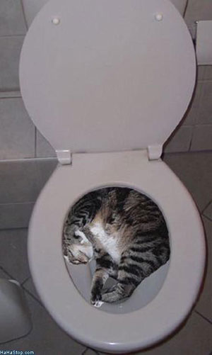 Cat_In_Toilet856