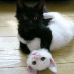 Denna söta kattbild har Gudrun West skickat in. Katterna är hennes dotters.