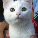 Detta är innekatten Destiny Angel Nea Nilsson. Hon är den bästa katten som finns, enligt matte Emily!