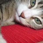Denna söta kattunge heter Findus. På bilden är han 3 månader gammal.