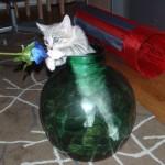Denna söta katt heter Princess och är tre månader gammal. Matte heter Magdalena.