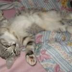 Detta är katten Princess. Hon är tre månader gammal.