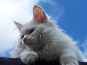 kattskotsel