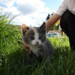 Här kommer en bild på Maria Pedersens underbara kattungeHon kallas oftast för Kissen eftersom de inte kunnat enas om ett bättre namn.