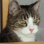 Lena Larsson i Norrköping har skickat in en bild på sin älskade katt Murre, som tyvärr inte finns med längre.