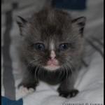 Denna jättesöta kattungen är fotograferad av Sabina.