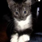Här kommer en bild på kissen Saga, hon är 15 v och busigast i hela världen!