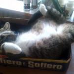 Detta är katten Sigge. Han kan ligga och sova var som helst, hälsar matte Catarina.