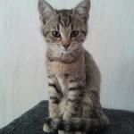 Sandra har skickat in denna bilden på katten Stina.